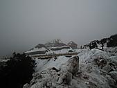 2011.02.18櫻花密境-武陵農場:DSCF0759.JPG