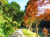 2019.11.23杉林溪森林生態渡假園區:IMG_2651.JPG