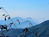 2015.12.19嘉義大凍山國家森林步道:IMG_3532.JPG