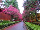 2019.03.09九族文化村櫻花祭:IMG_1215.JPG