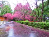 2019.03.09九族文化村櫻花祭:IMG_1219.JPG