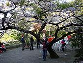 2010.03.19阿里山賞櫻:DSC07785.JPG