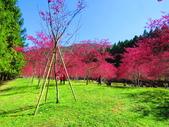 2021.02.15九族文化村:IMG_4884.JPG