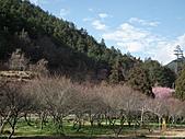 2011.02.18櫻花密境-武陵農場:DSCF0851.JPG