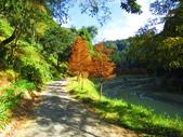 2019.11.23杉林溪森林生態渡假園區:IMG_2650.JPG