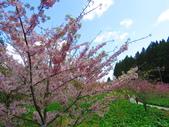 2020.03.15福壽山農場千櫻園:IMG_3303.JPG