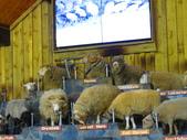 2019.03.12紐西蘭南北島之旅:北島愛哥頓牧場IMG_1739.JPG