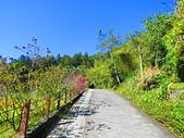 2015.12.19嘉義大凍山國家森林步道:IMG_3517.JPG