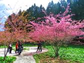 2020.03.15福壽山農場千櫻園:IMG_3314.JPG