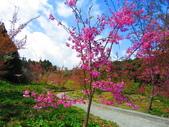 2020.03.15福壽山農場千櫻園:IMG_3317.JPG