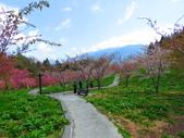 2020.03.15福壽山農場千櫻園:IMG_3319.JPG