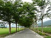 2007.05.01花東之旅:P1000429.JPG