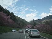 2011.02.18櫻花密境-武陵農場:DSCF0822.JPG