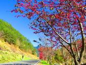 2019.02.01福壽山農場:IMG_0775.JPG