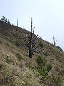 2007.05.10玉山北峰:DSC00423.jpg
