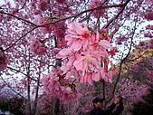 2009.2.21.武陵美斃.......:DSC01567.jpg