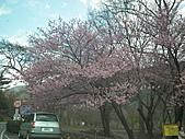 2011.02.18櫻花密境-武陵農場:DSCF0823.JPG