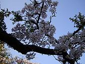 2010.03.19阿里山賞櫻:DSC07789.JPG