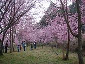 2009.2.21.武陵美斃.......:DSC01560.jpg
