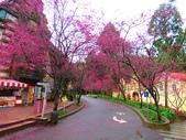 2019.03.09九族文化村櫻花祭:IMG_1201.JPG