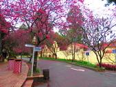 2019.03.09九族文化村櫻花祭:IMG_1202.JPG