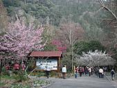 2011.02.18櫻花密境-武陵農場:DSCF0857.JPG