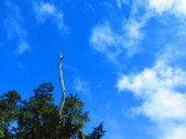 2018.12.15阿里山對高岳步道:IMG_0571.JPG
