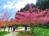 2020.03.15福壽山農場千櫻園:IMG_3315.JPG