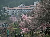 2011.02.18櫻花密境-武陵農場:DSCF0861.JPG