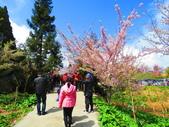2020.03.15福壽山農場千櫻園:IMG_3306.JPG