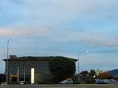 2019.03.12紐西蘭南北島之旅:北島羅吐魯阿飯店IMG_1725.JPG