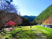 2019.02.01福壽山農場:IMG_0766.JPG
