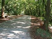 2009.08.02.奧萬大:一路樹蔭茂盛不怎麼熱