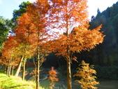 2019.11.23杉林溪森林生態渡假園區:IMG_2652.JPG