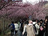 2011.02.18櫻花密境-武陵農場:DSCF0862.JPG