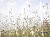 拈花惹草:香附子