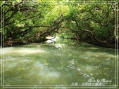 悠遊台南:四草綠色隧道 2020