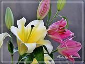 拈花惹草:香水百合