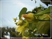 拈花惹草:黃瑾樹