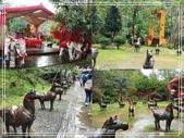 悠遊台北:十分瀑布 2020