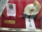 悠遊台南:抹香鯨陳列館 2020