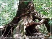 悠遊新竹:神木群 2020