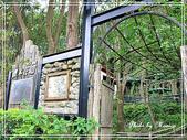 悠遊新竹:櫻木花道