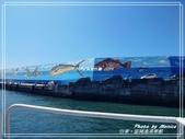 悠遊台東:富岡漁港乘船 2019