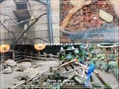 悠遊新竹:綠世界生態農場 2017