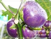 蔬果物語:54.jpg