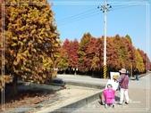 悠遊台南:六甲落羽松 2021