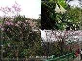 悠遊台北:陽明山花季 2019