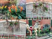 悠遊台北:士林官邸春節花卉展 2019
