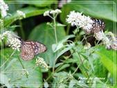 寵物當家:蝶兒。蝶兒。滿天飛